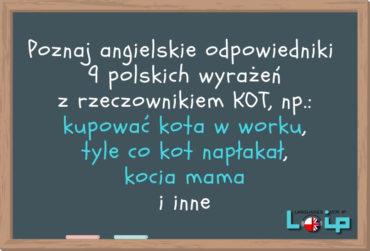 Angielskie tłumaczenia 9 polskich wyrażeń z rzeczownikiem KOT