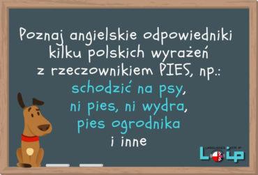 Angielskie tłumaczenia polskich zwrotów z rzeczownikiem PIES
